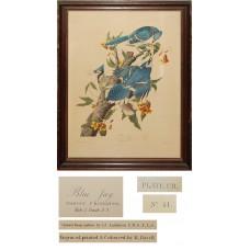 Robert Havell - Blue Jay (Plate CII) After Audubon