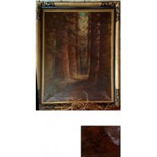 Redwoods - Martella Cone Lane